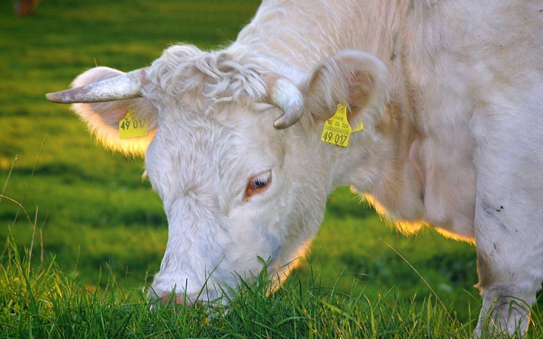 Why You Need Grass-fed Butter
