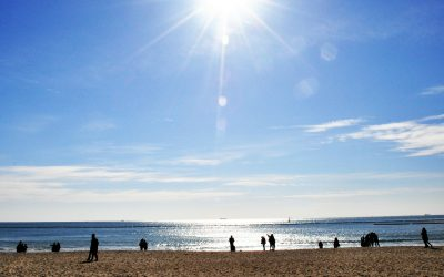 A Guide to Vitamin D-Do I need to Supplement